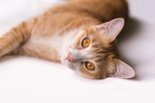 O gato está olhando para a frente e olhando bonito.