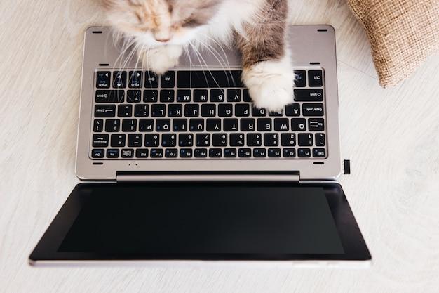O gato fofo coloca as patas do laptop na frente dele. animais de estimação encantadores da família estudam a nova tecnologia de seus proprietários, vista de cima