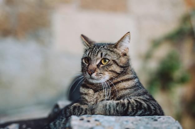 O gato fofo está esticado