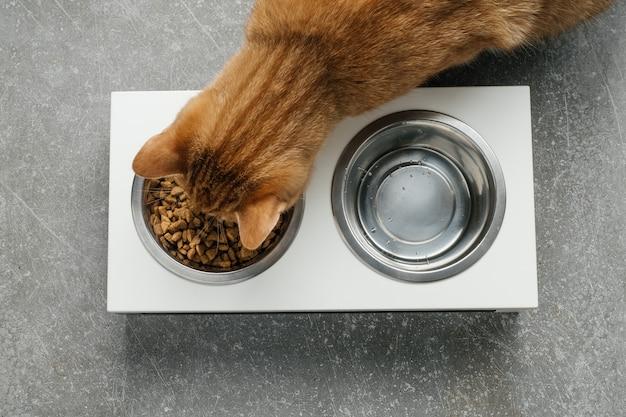 O gato ginger está comendo da tigela uma dieta completa e balanceada