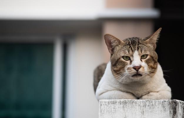 O gato idoso que senta e que olha a câmera, foco seletivo.