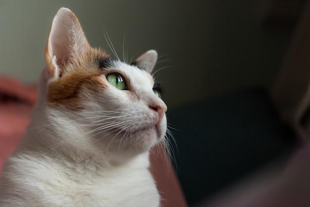 O gato malhado estava olhando para algo do lado de fora