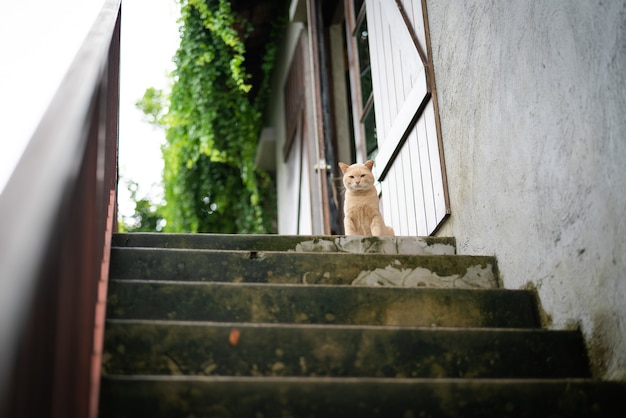 O gato marrom bonito sentou-se na etapa superior da etapa que espera a refeição do proprietário