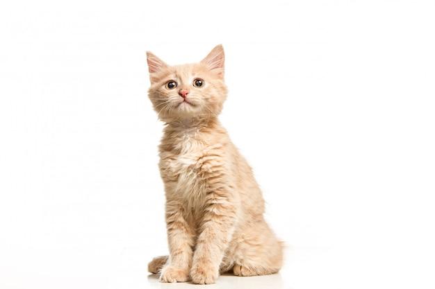 O gato na parede branca
