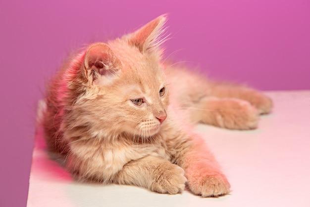 O gato no espaço rosa