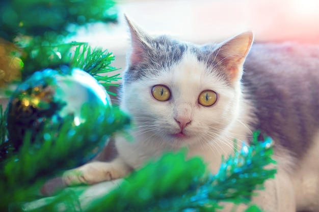 O gato perto da árvore de natal olha atentamente para a frente