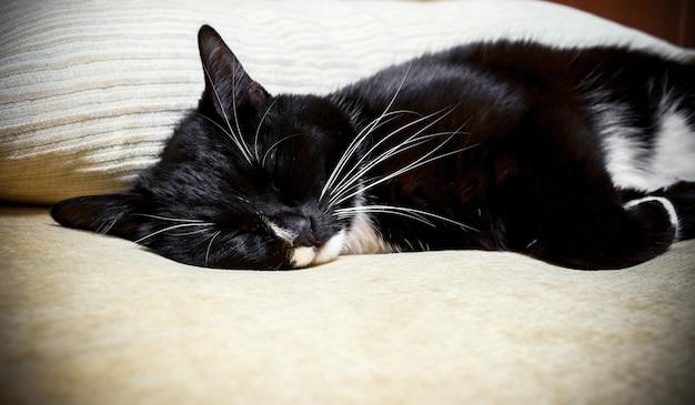 O gato preto e branco dorme no sofá bege.