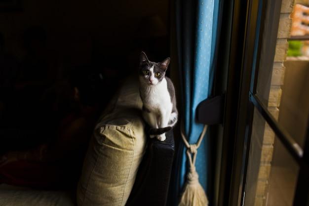 O gato preto e branco por uma janela observa e olha a câmera.