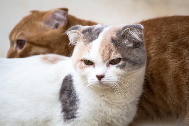 O gato relaxando no chão, gato marrom e gato branco