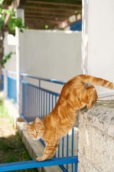O gato ruivo desce de uma cerca de pedra perto da casa