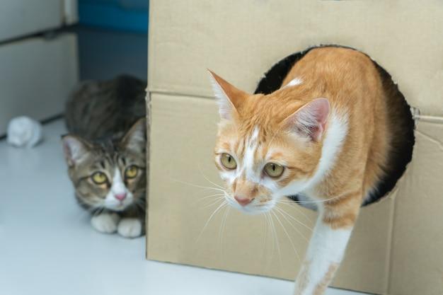 O gato sai da grande caixa.