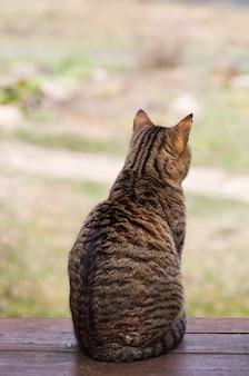 O gato senta-se de costas e fica triste