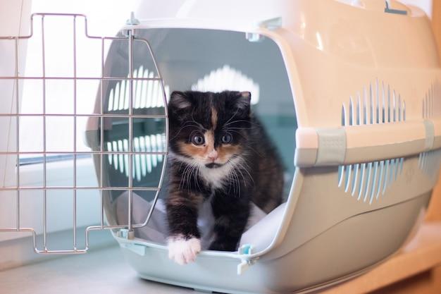 O gato senta-se em um transportador para animais. um animal de estimação. transporte de animais. gatinho pequeno.