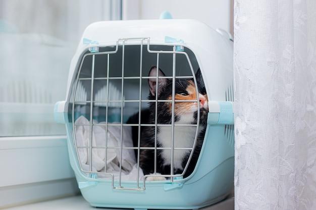 O gato senta-se em um transportador para animais. um animal de estimação. transporte de animais.
