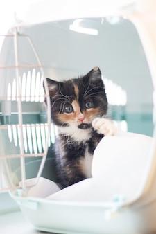 O gato senta-se em um transportador para animais.