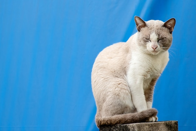 O gato sentado no muro da casa contra o fundo de tela azul