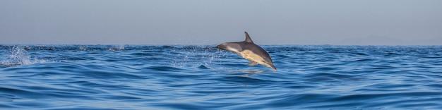 O golfinho pula da água