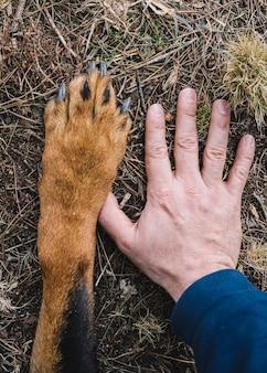 O grande pé de um cão rottweiler e a mão de um homem
