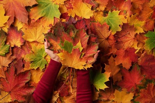 O grupo das folhas de plátano coloridas nas mãos fêmeas com pregos vermelhos projeta.