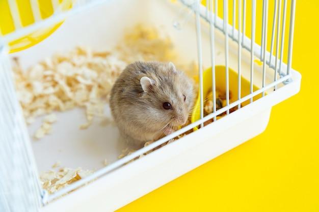 O hamster anão cinza come em uma gaiola.