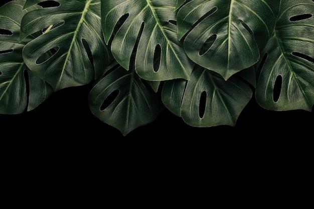 O havaí tropical deixa monstros em um fundo escuro e copie o espaço para o texto. selva mínima de verão.