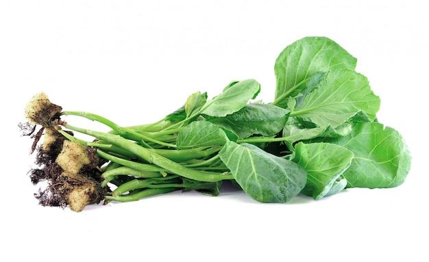 O hidropônico orgânico de vegetais de couve