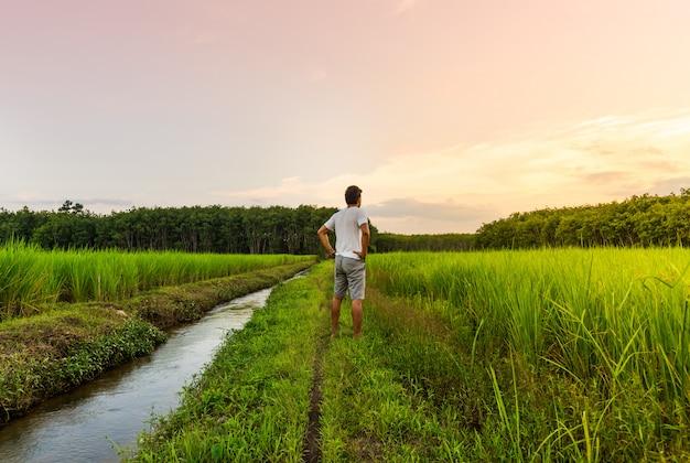 O homem olha para o campo de arroz com a cor do céu na luz de moning