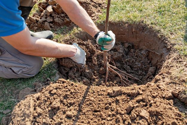 O homem planta o conceito da árvore, da natureza, do ambiente e da ecologia. mãos, cima