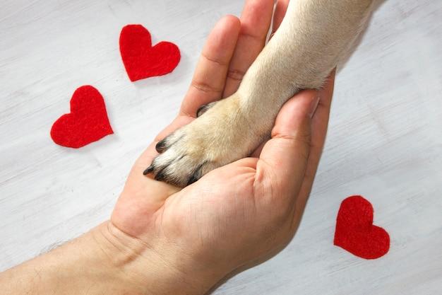 O homem prende a pata do cão com amor. corações vermelhos em fundo branco