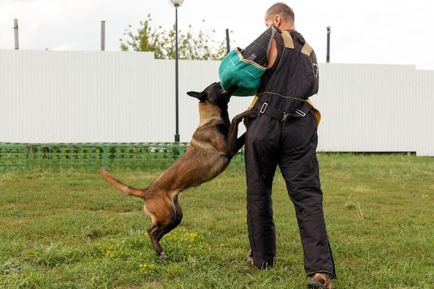 O instrutor conduz a aula com o cão pastor belga. o cão protege seu dono.
