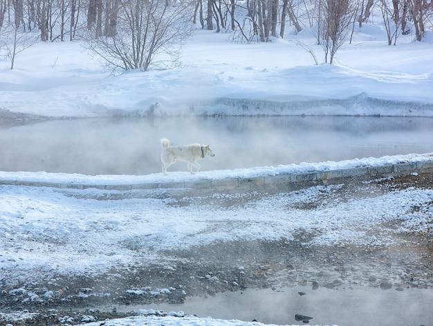 O inverno mineral quente no centro de recreação na aldeia de malki em kamchatka