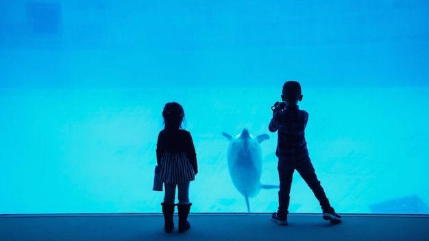 O irmão e a irmã de silhoutte assistem e gravam filmagens de golfinhos nadando em vídeo no aquário de nagoya, japão. animal marinho mostrando no zoológico de diversões.