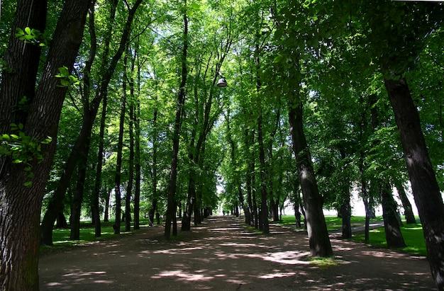 O jardim do palácio real em oslo, noruega