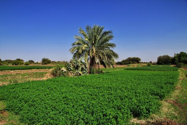 O jardim na pequena vila no rio nilo, cartum, sudão