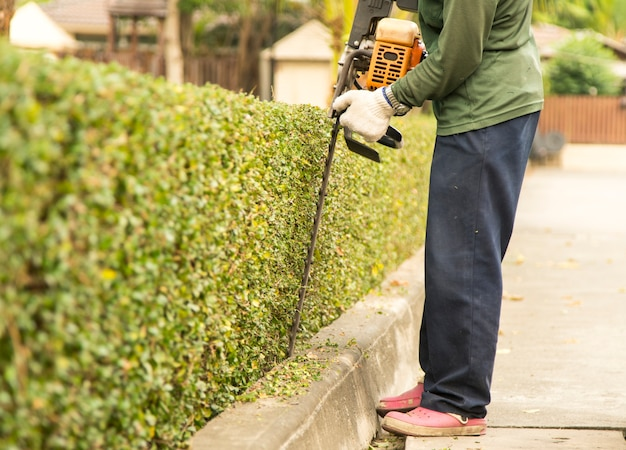 O jardineiro está aparando galhos