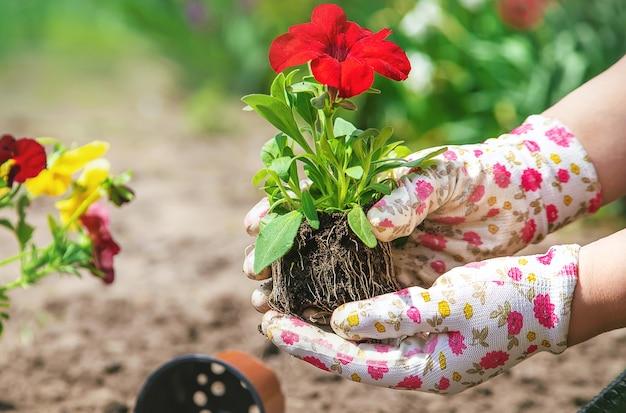 O jardineiro está plantando um jardim de flores
