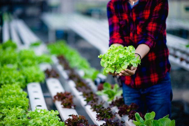 O jovem e seu jardim de saladas e seu sorriso feliz