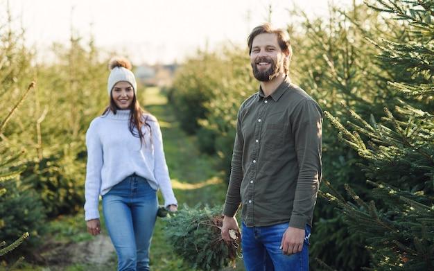 O jovem e sua linda esposa carregam uma árvore de natal recém-cortada em uma plantação, preparando