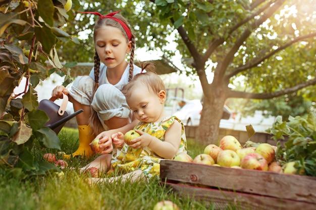 O jovem feliz e bebê durante a colheita de maçãs em um jardim ao ar livre