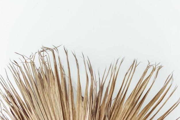 O junco seco fura o fundo branco. composição floral mínima
