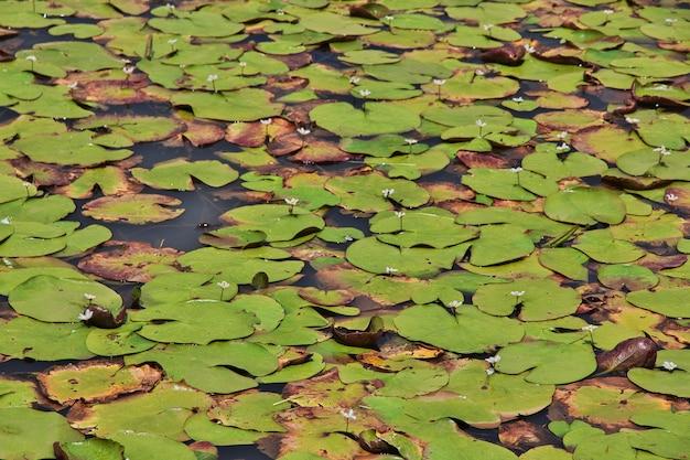 O lago no vale de wamena, papua, indonésia