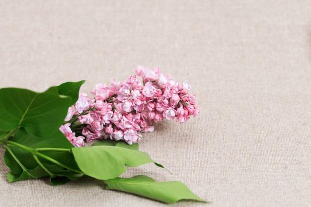 O lilás floresce a cor cor-de-rosa na toalha de mesa do algodão. fundo florido com espaço de cópia.