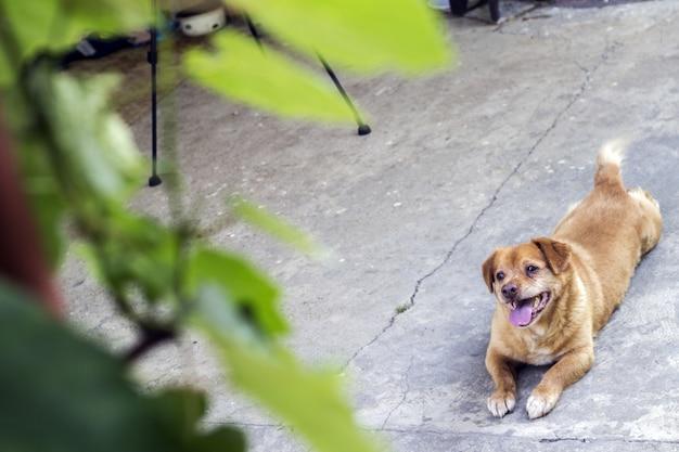 O lindo cão está pronto para jogar.