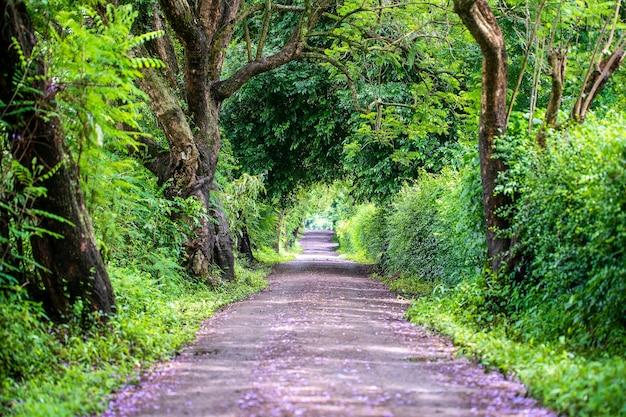 O longo caminho da estrada ao lado de grandes árvores verdes como um túnel de árvore. tanzânia, áfrica oriental.