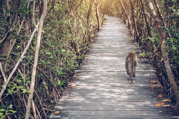 O macaco está andando na ponte.