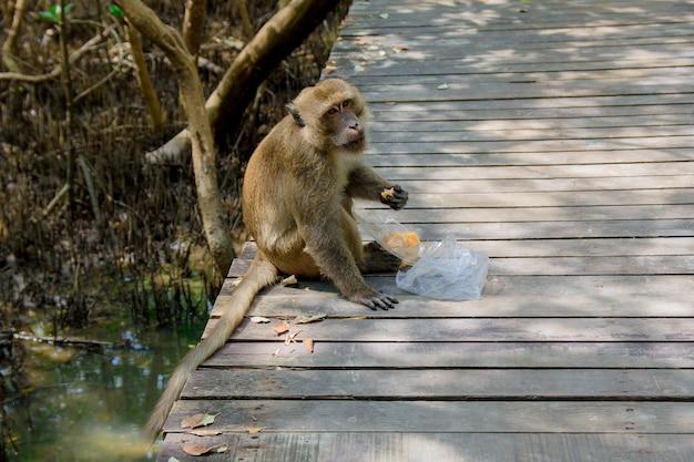 O macaco está sentado comendo comida roubada de turistas.