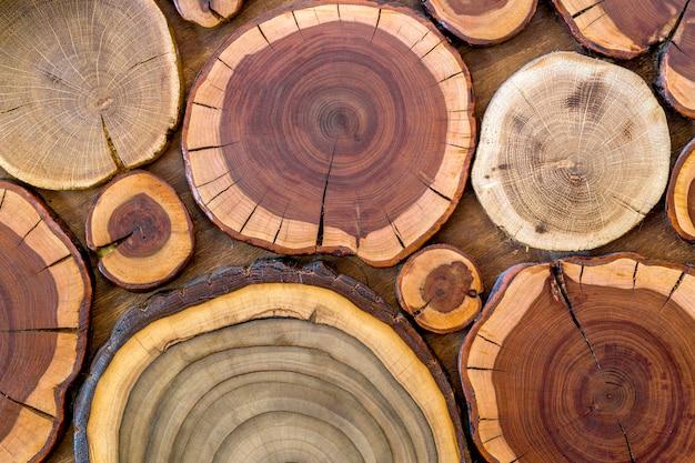 O macio ecológico natural contínuo não pintado de madeira redondo coloriu o fundo marrom e amarelo dos cotoes crepitou, seções do corte da árvore com tamanhos diferentes dos anéis anuais e formulários, textura do fundo.