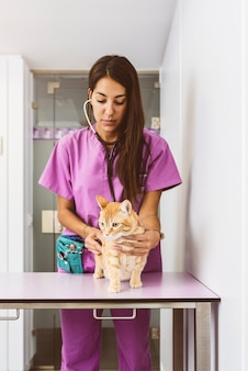 O médico veterinário está fazendo um check-up em um lindo gato bonito. conceito veterinário.
