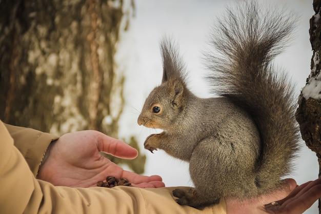 O menino alimenta um esquilo por nozes
