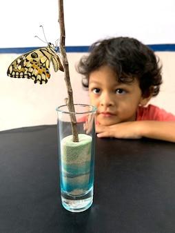 O menino asiático olha a borboleta que deixa as crisálidas.